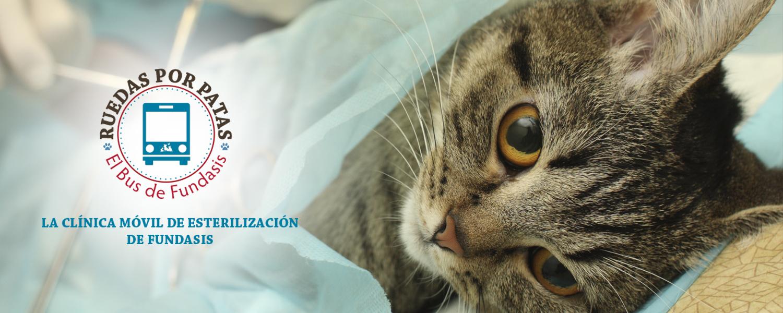 Esterilización Panama operar perros y gatos fundación esterilización